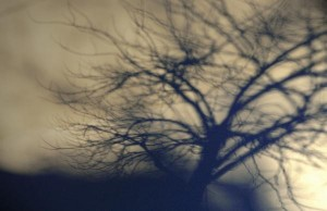 shadow-tree-kevin-felts (1)